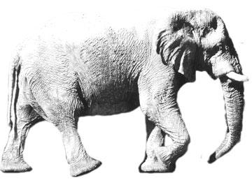 White elephant country