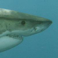 Sharks. In and out of politics