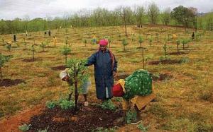 Land. Eradication before expropriation