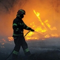 Knysna fire: secret CSIR report bombshell