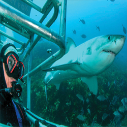 Shark mystery: Where have all the Cape's Great Whites gone?