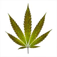 Pamensky moves from Eskom to cannabis
