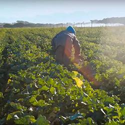 Cape Town mayor urged to save precious aquifer and treasured Philippi farmland